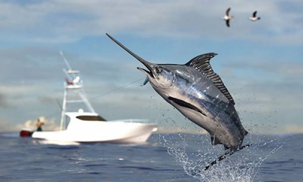 Blue Marlin Fishing near 30A